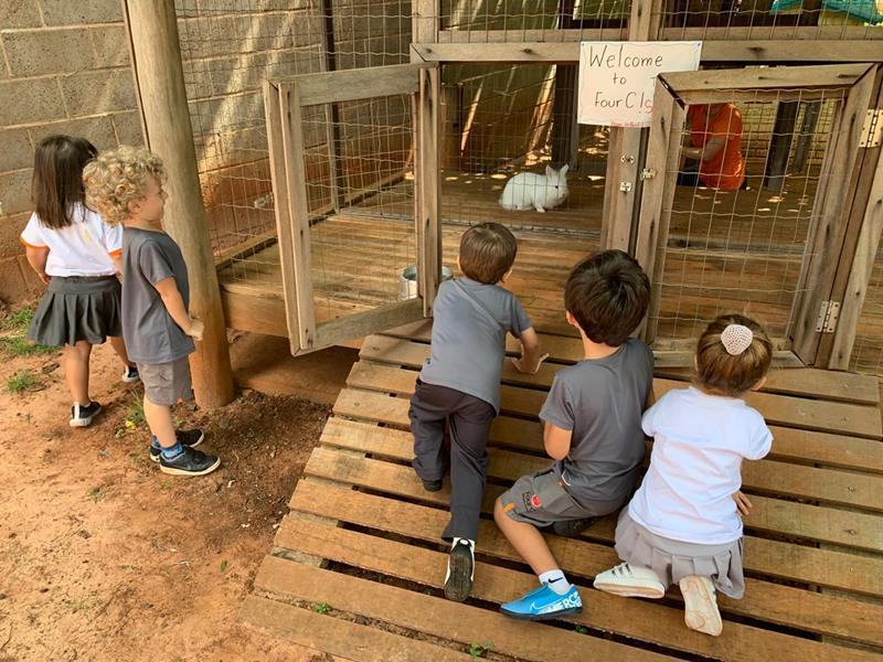 Animais de estimação: motivando a aprendizagem