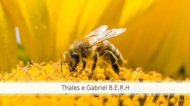 Extinção das abelhas ao longo do tempo e o risco para a humanidade